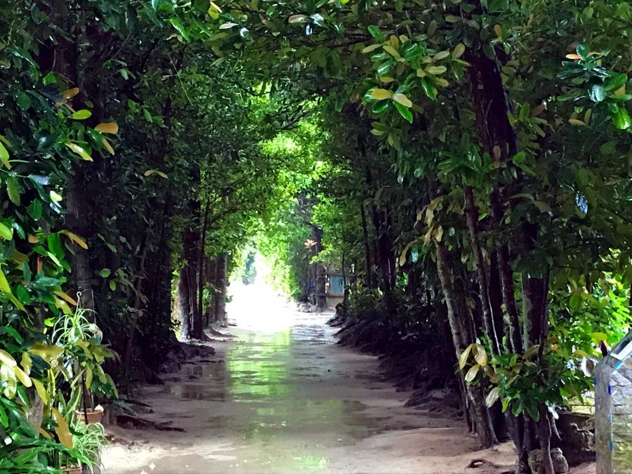 沖縄旅行記・美ら海水族館と備瀬のフクギ並木で雨の中の散歩